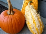 Homegrown Pumpkin and Gourds