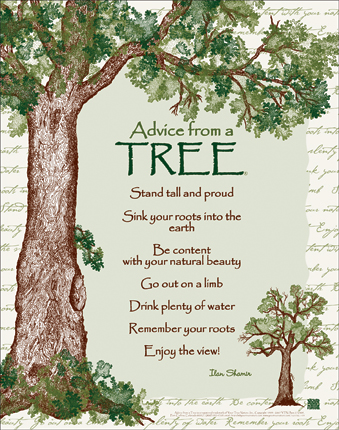 advice from a tree_2